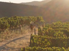 Walking tour by the Douro wine country and historical villages